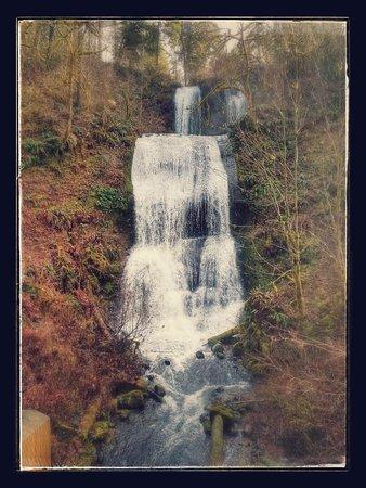 Lebanon, Орегон: Royal Terrace Falls (not-so-green season)