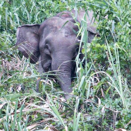 Kinabatangan Jungle Camp (Sukau, Malaysia): What You Need ...