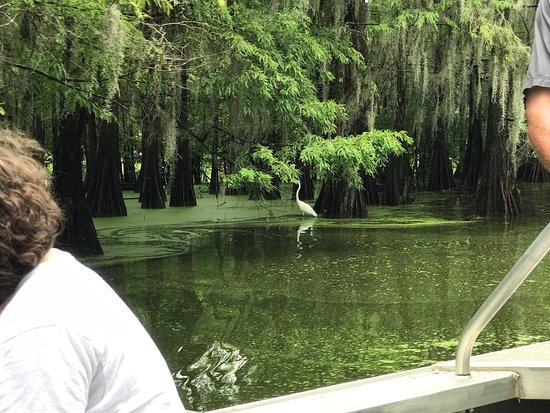 Breaux Bridge, Луизиана: Champagne's Cajun Swamp Tours