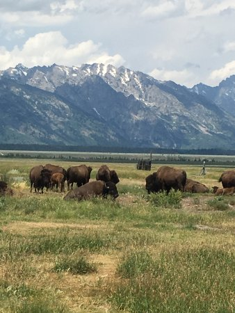 Kelly, WY: still grazing next to the barn