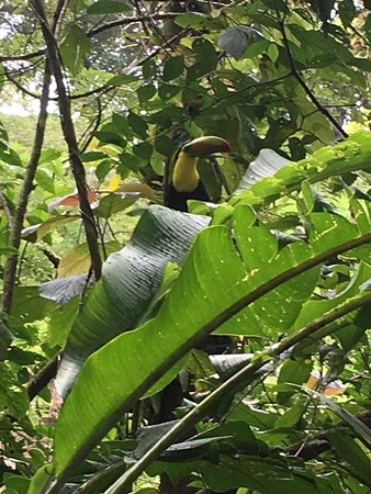 Butterfly Conservatory : Didnt expect to see a toucan but was lovely surprise.