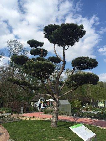 Tulln, Österrike: Mükemmel doğa ve çicek tabiat