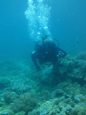 Marco Vincent Dive Resort: dive trip