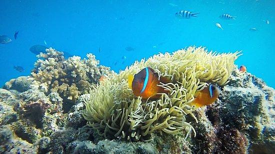 維提島照片