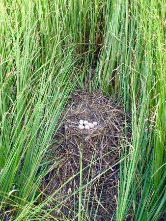 Salt Marsh Safari-The Skimmer: photo5.jpg