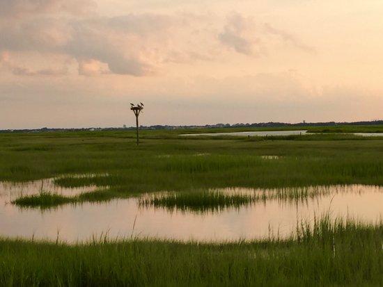 Salt Marsh Safari-The Skimmer: photo7.jpg