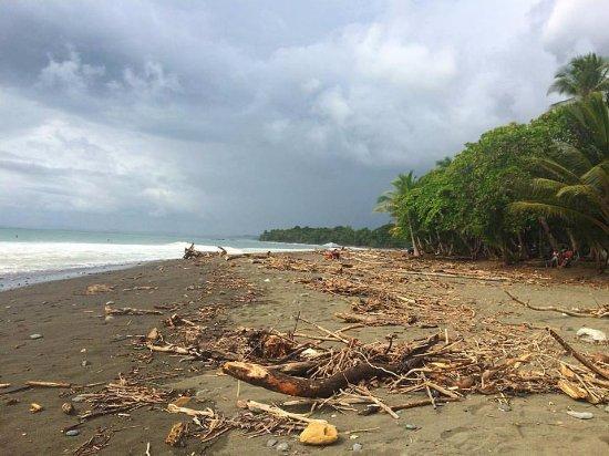 Pavones, Kosta Rika: Troncos e galhos trazidos pelo rio que desemboca no mar.