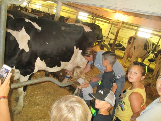 Hinchley's Dairy Farm Tours-billede