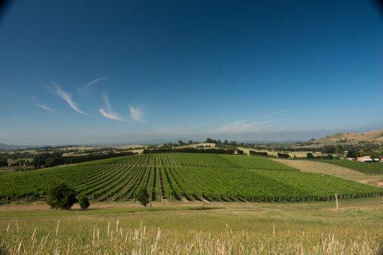 Dixons Creek, Australia: Dixon's Creek vineyard