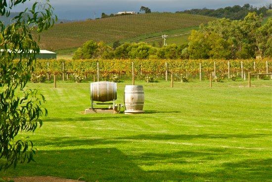 Dixons Creek, Australia: Mandala Wines site