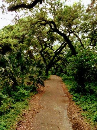 Enchanted Forest Elaine Gordon Park照片