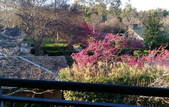 Mercure Resort Hunter Valley Gardens: IMAG3922_1_large.jpg