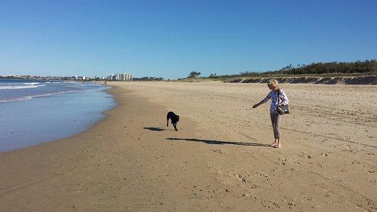 North Shore Dog Beach 사진