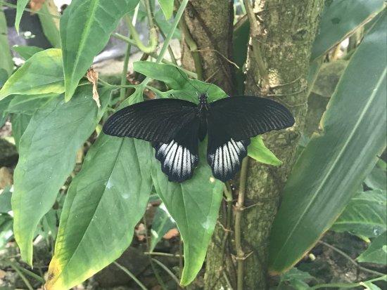 Quartier D'Orleans, St. Maarten-St. Martin: Butterfly
