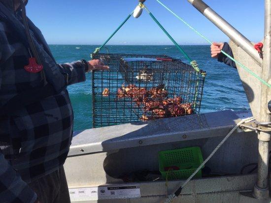 Kaikoura, Nueva Zelanda: Crayfish!