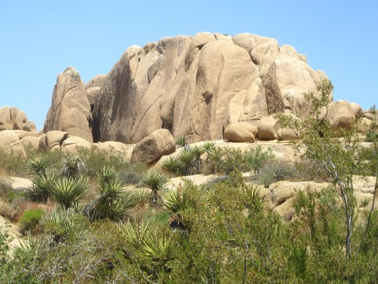Jumbo Rocks Campground, Joshua Tree National Park