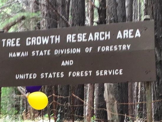 ‪‪Makawao Forest Reserve‬: Includes very nice walk, worthwhile. Challenging road on the loop driving to forest.‬