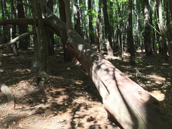 Makawao Forest Reserve: Includes very nice walk, worthwhile. Challenging road on the loop driving to forest.