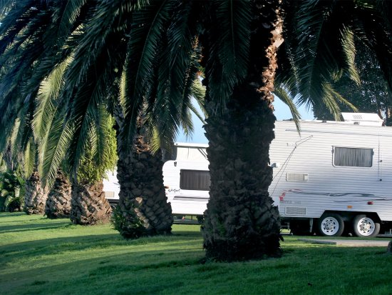 Moruya, Αυστραλία: Its back to nature at every campsite at Riverbreeze!
