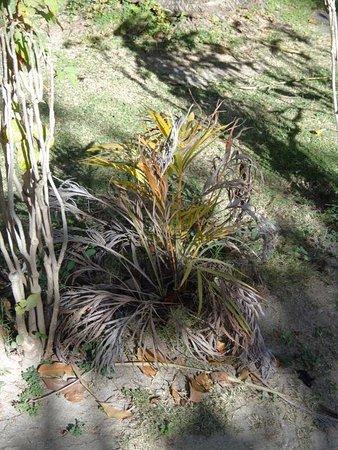 Plantation Island Resort: General state of the gardens