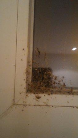 Hotel Nabucco: il regno dei... ragni.......