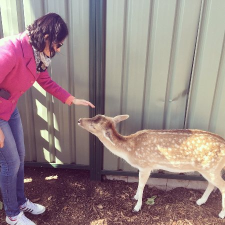 Nulkaba, Australia: Hunter Valley Zoo