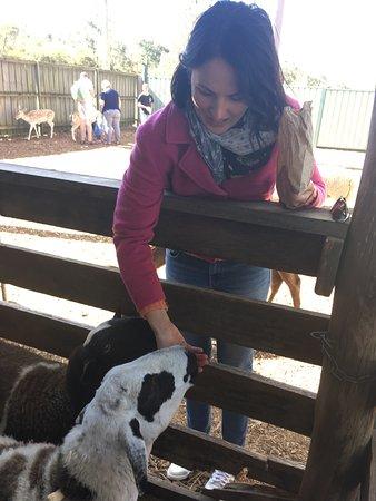 Nulkaba, Australien: Hunter Valley Zoo