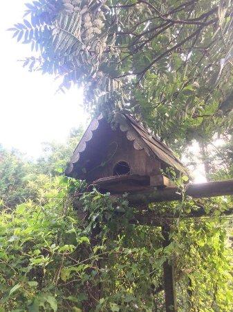 Conservatoire Avicole du Puyobrau: photo4.jpg
