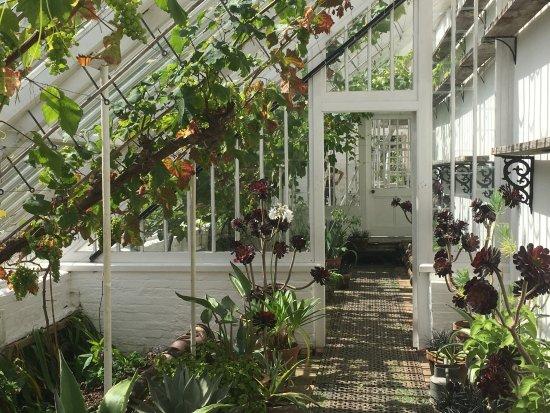 St Austell, UK : greenhouse grapes