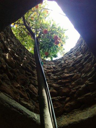 Forestiere Underground Gardens: received_461902024187431_large.jpg