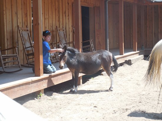 Livermore, CO: My 12 year old w/ a guest favorite, I-Spy the mini-mule