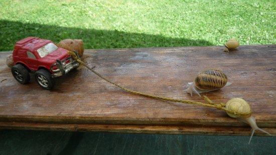 Mieussy, Франция: La puissance de l'escargot....