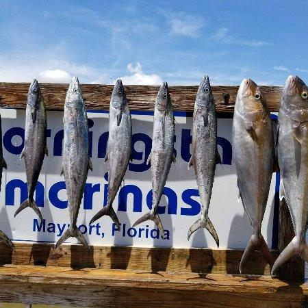 Atlantic Beach, FL: IMG_20170718_192518_691_large.jpg