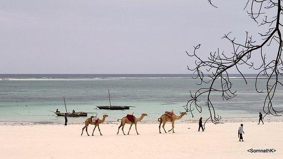 Baobab Beach Resort & Spa: The Beach !!