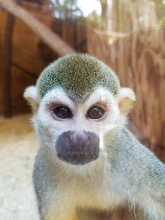 New Castle, PA: Adorable monkey