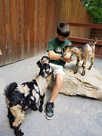 New Castle, PA: Petting the goats