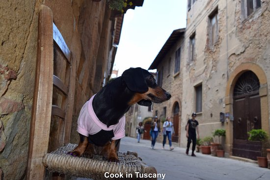 Montefollonico, İtalya: Talula at Cook in Tuscany