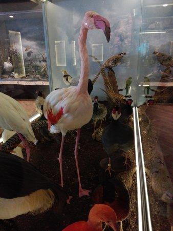 Μουσείο Φυσικής Ιστορίας & Μουσείο Μανιταριών: IMG_20170807_133348_large.jpg