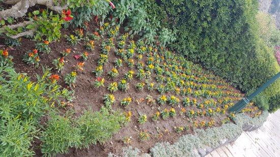 Peperoncini colorati picture of giardini poseidon terme forio
