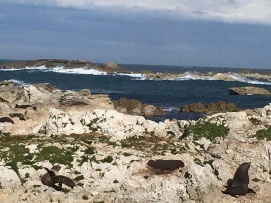 Kaikoura, Nueva Zelanda: More seals