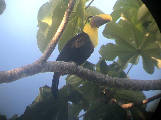 写真Bosque del Cabo Rainforest Lodge枚