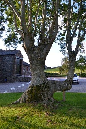 Lorton, UK: The Tree