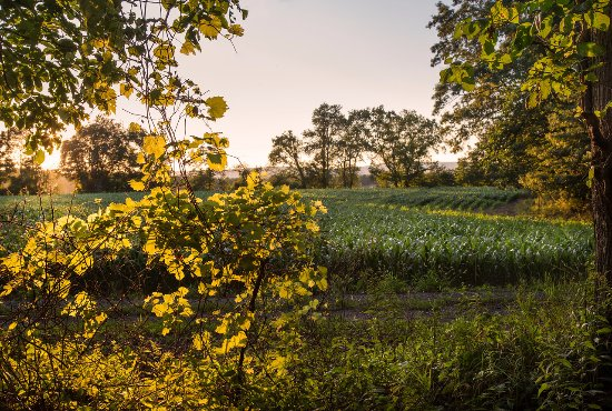 Middletown, Estado de Nueva York: Take a stroll through the fields of sorghum or rye.