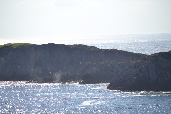 Quirpon Island, Kanada: Whale coming up for air