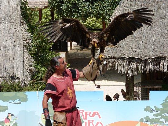 Terra Natura: fugleshow