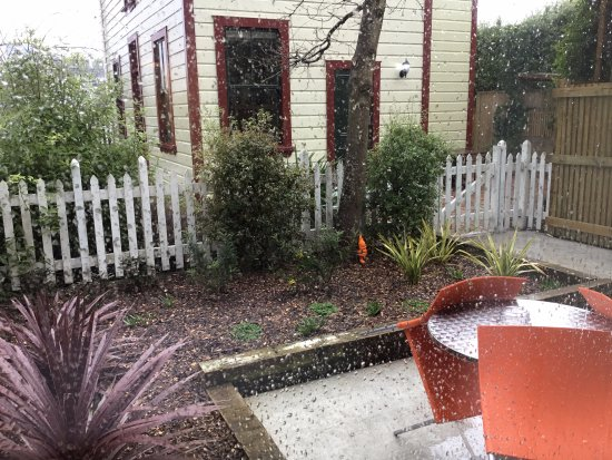 Wellington City Bed and Breakfast: Garden view (winter) from bed