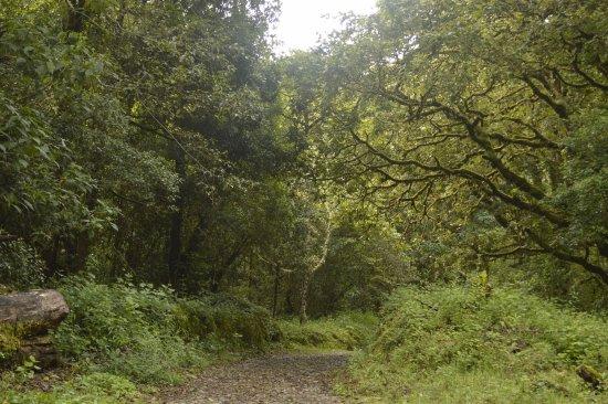 Savegre Hotel, Natural Reserve & Spa: hiking trails