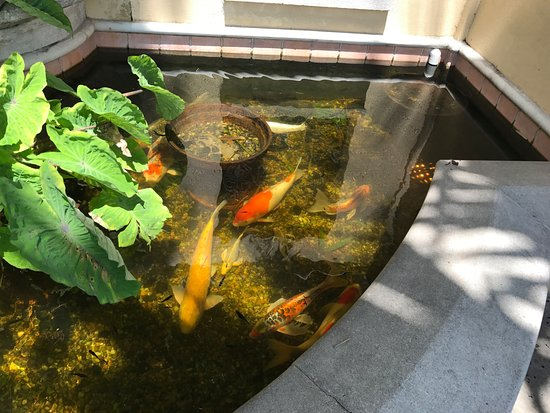 Lake Mirror: Inside Holis Garden is a pond with magnificent koi.