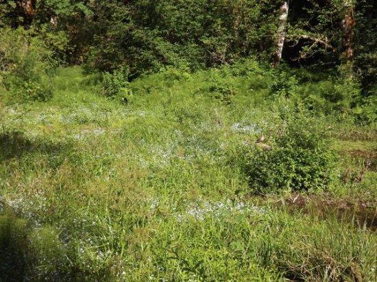 Welches, Oregón: wildood wetlands - find the duck