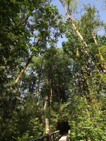Wildwood Recreation Site: wildwood trees over path